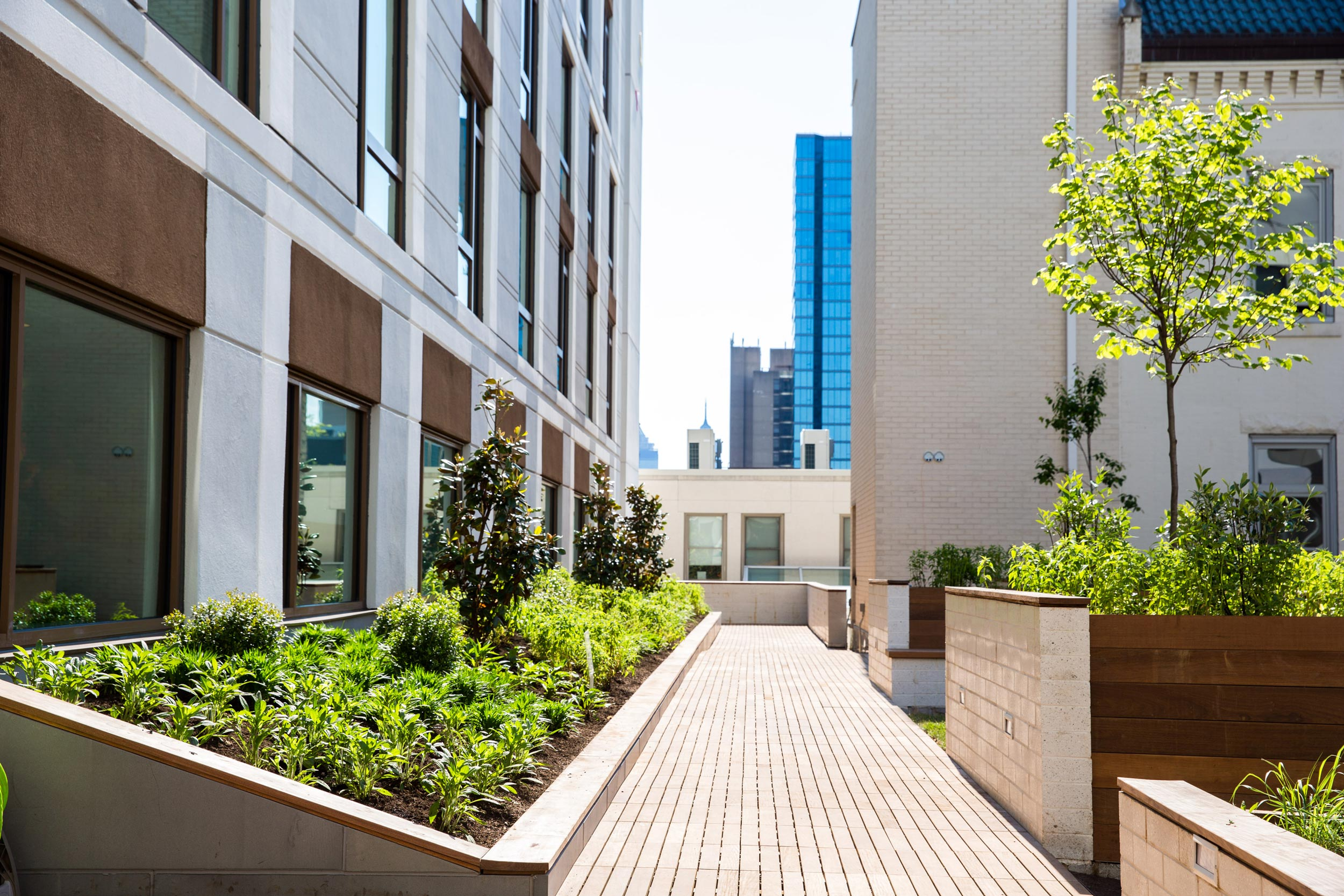 GCW built custom raised concrete and Ipe planters along side an Ipe deck built on a pedestal system.