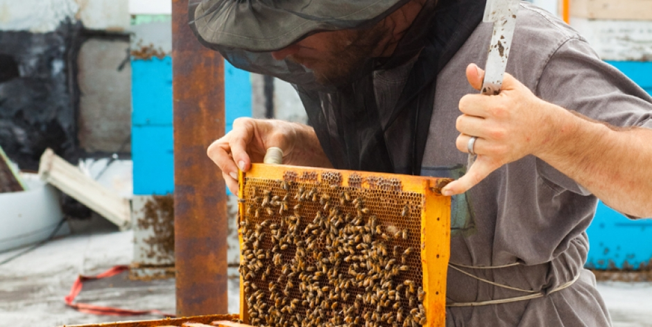 Owner, Milk and Honey Market